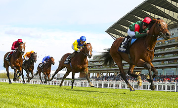 Maize winning the Sagaro Stakes here at Ascot. Image Racing Post